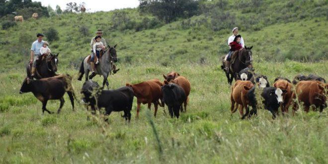 Direito Agrário e Pecuária